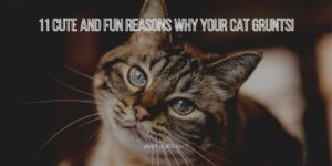 Why Your Cat Grunts! 11 Cute And Fun Reasons