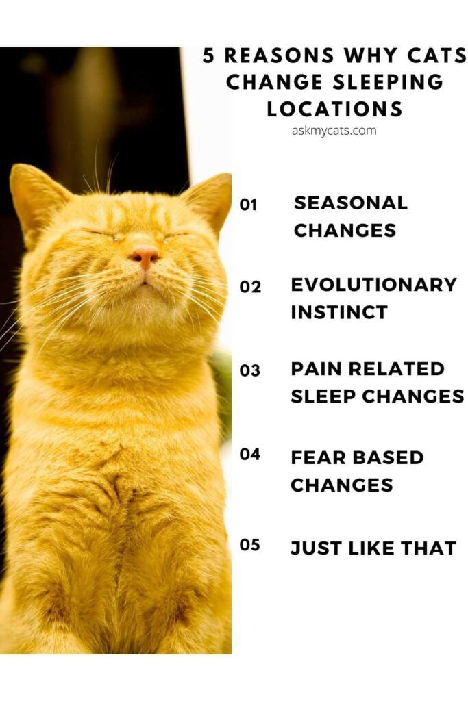 5 reasons why cats change sleeping locations