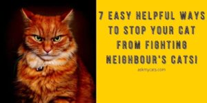 Stop Your Cat From Fighting Neighbor's Cats! 7 Easy Helpful Ways