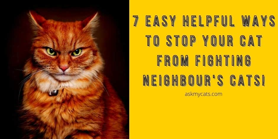 Stop Your Cat From Fighting Neighbor's Cats