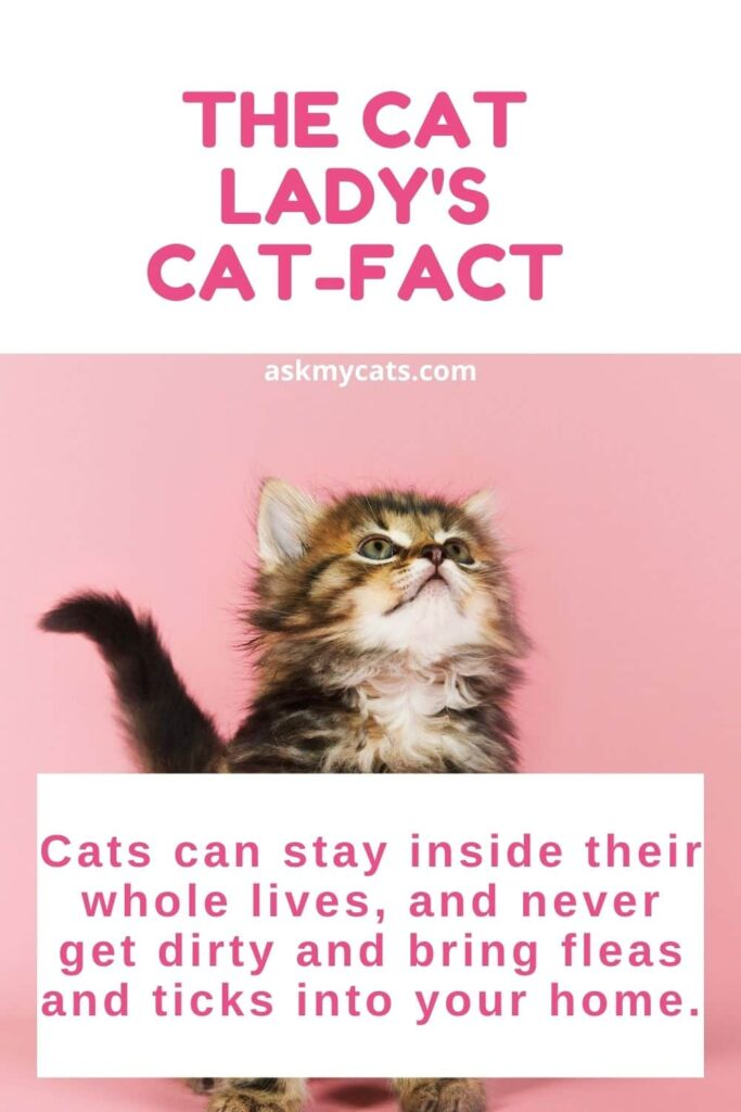 The Cat Lady's Cat-fact