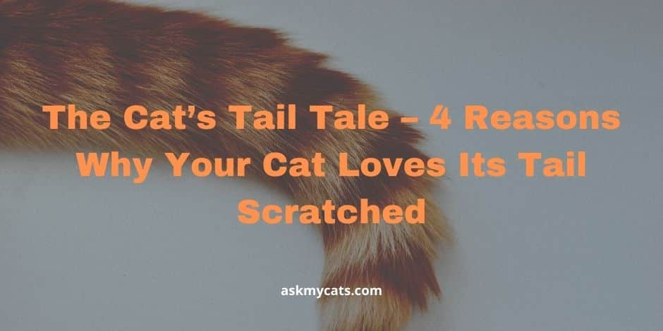 The Cat's Tail Tale – 4 Reasons Why Your Cat Loves Its Tail Scratched