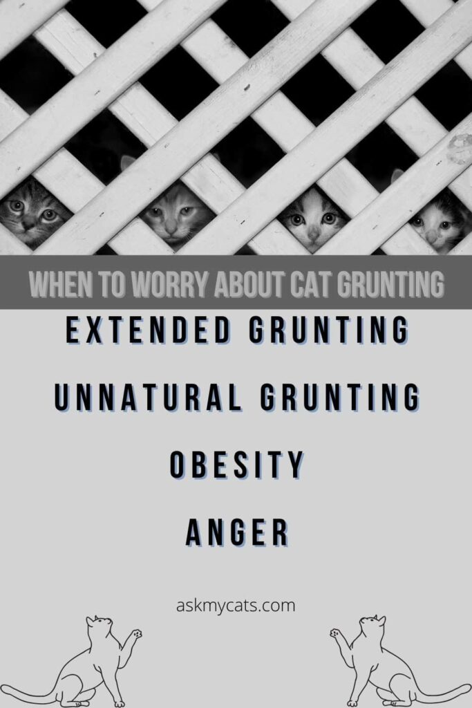 When to worry about cat grunting