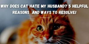 Why Does Cat Hate My Husband? 5 Helpful Reasons  and Ways To Resolve!