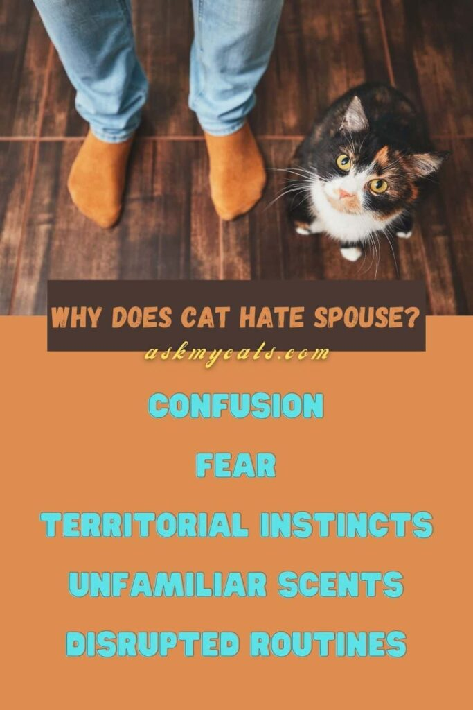 Why Does Cat Hate Spouse