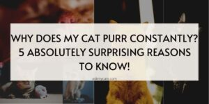 Why Does My Cat Purr Constantly? 5 Absolutely Surprising Reasons To Know!