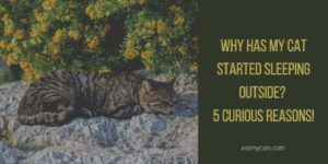 Why Has My Cat Started Sleeping Outside? 5 Curious Reasons!