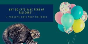 Why Do Cats Have Fear Of Balloons? : 7 Curious Reasons