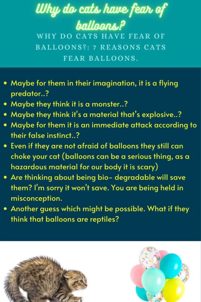 7 reasons Why Do Cats Have Fear Of Balloons