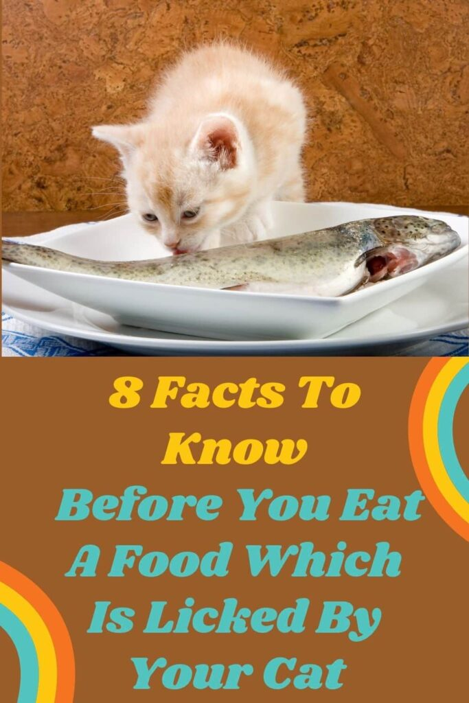 8 Facts To Know Before You Eat A Food Which Is Licked By Your Cat