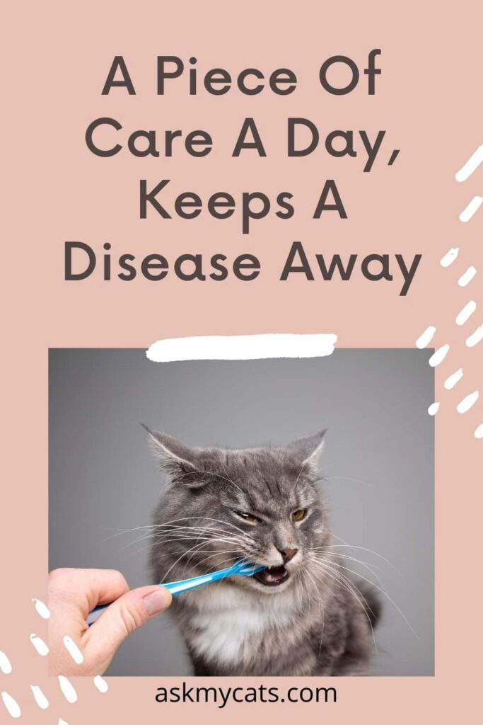 A Piece Of Care A Day, Keeps A Disease Away