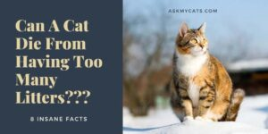 Can A Cat Die From Having Too Many Litters? 8 Insane Facts
