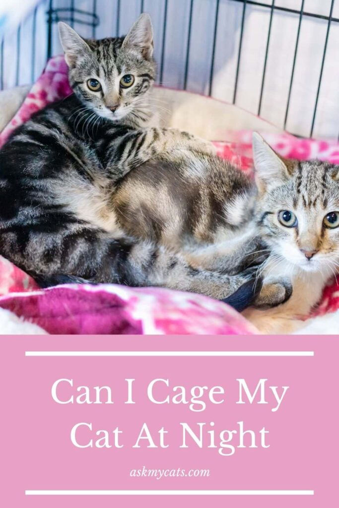 Can I Cage My Cat At Night