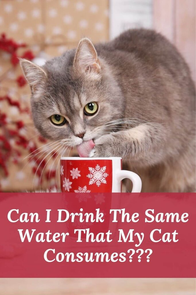 Can I Drink The Same Water That My Cat Consumes