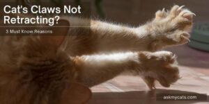 Cat's Claws Not Retracting? 3 Must Know Reasons