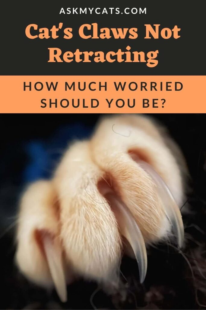 Cat's Claws Not Retracting How Much Worried Should You Be