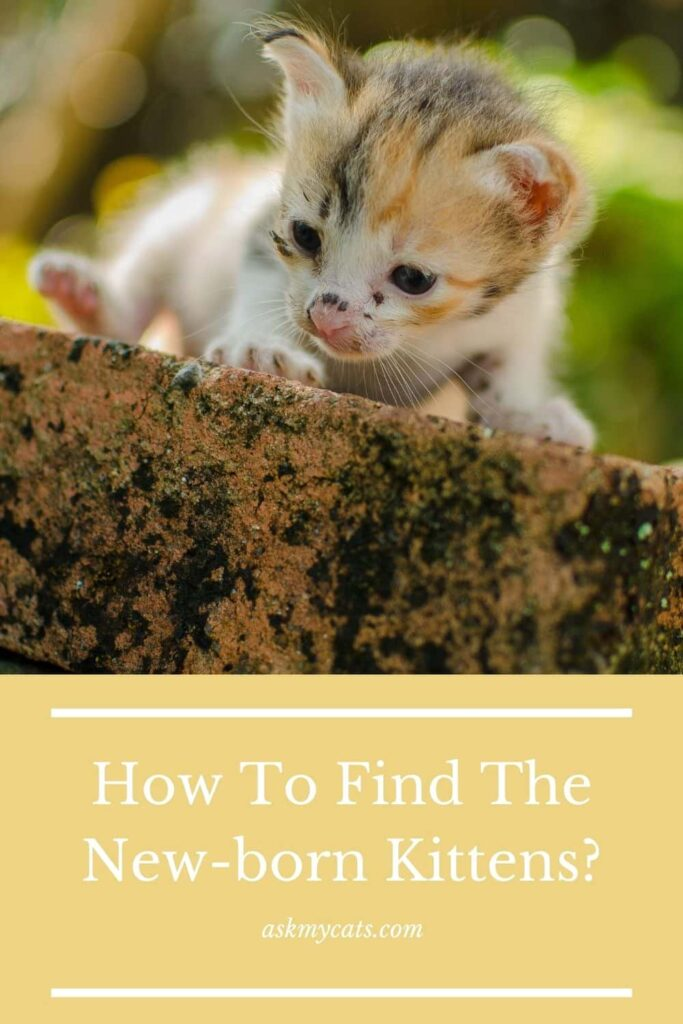 How To Find The New-born Kittens