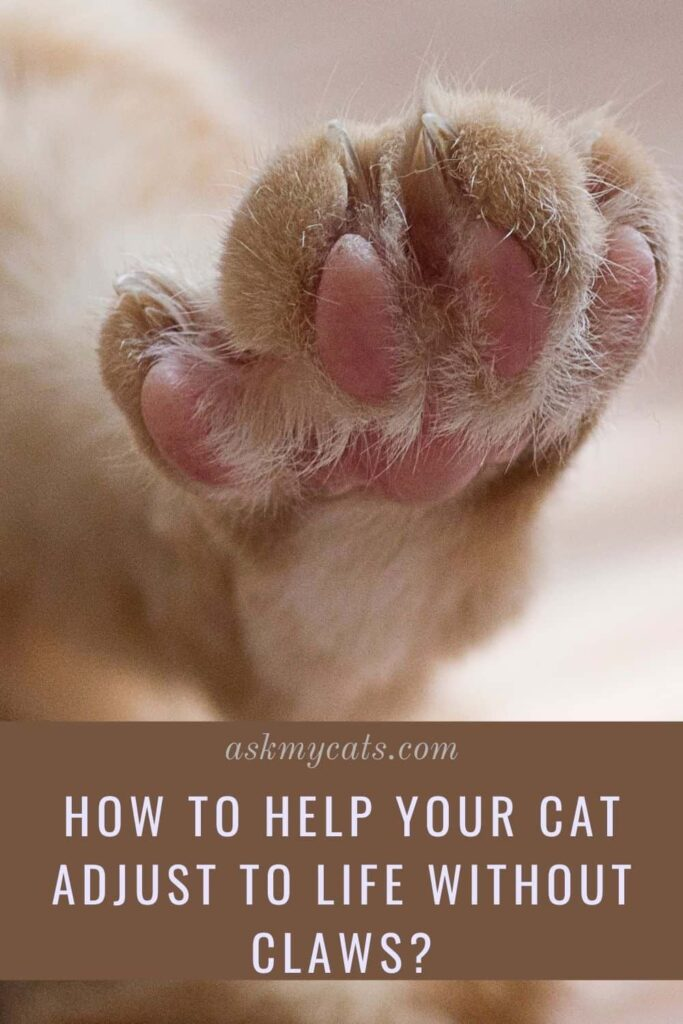 How To Help Your Cat Adjust To Life Without Claws