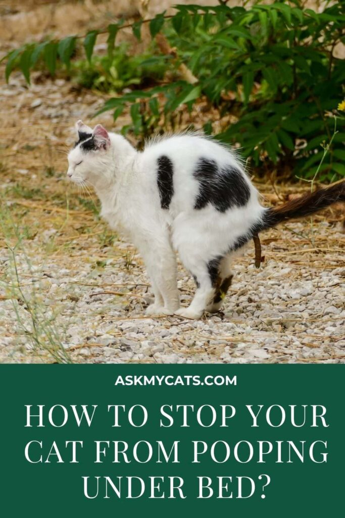 How To Stop Your Cat From Pooping Under Bed
