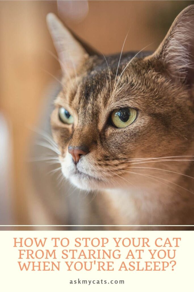 How To Stop Your Cat From Staring At You When You're Asleep