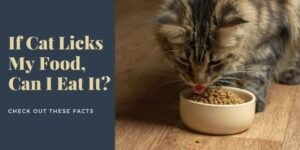 If Cat Licks My Food, Can I Eat It? 9 Facts To Know