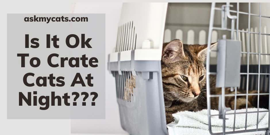 Is It Ok To Crate Cats At Night
