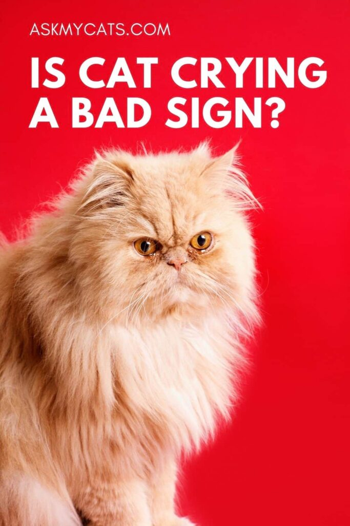 Is cat crying a bad sign