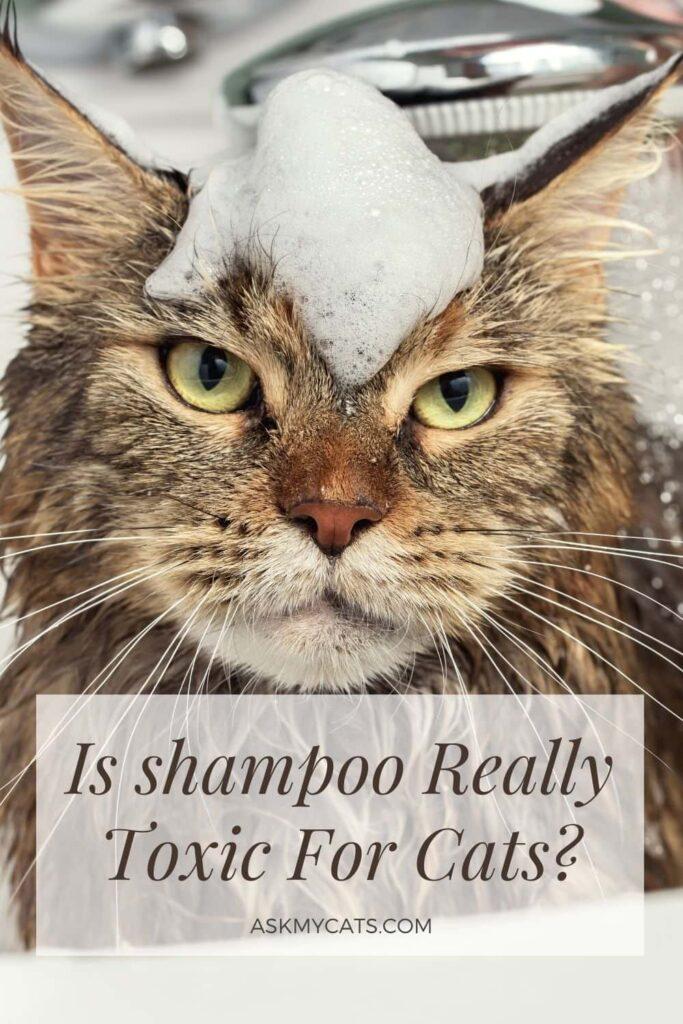 Is shampoo Really Toxic For Cats?
