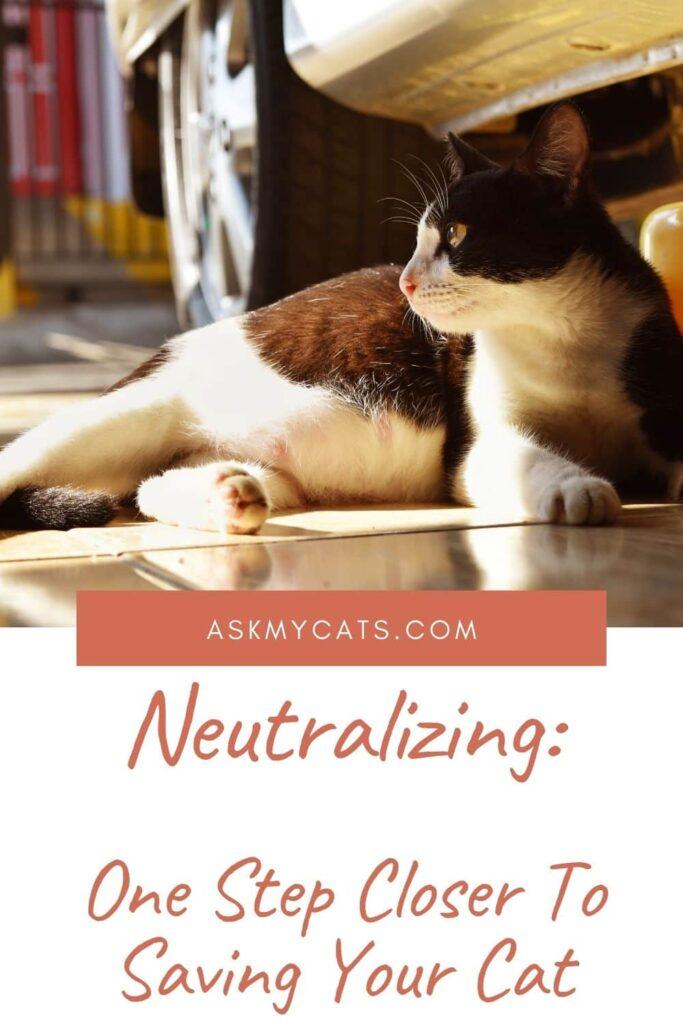 Neutralizing Cat