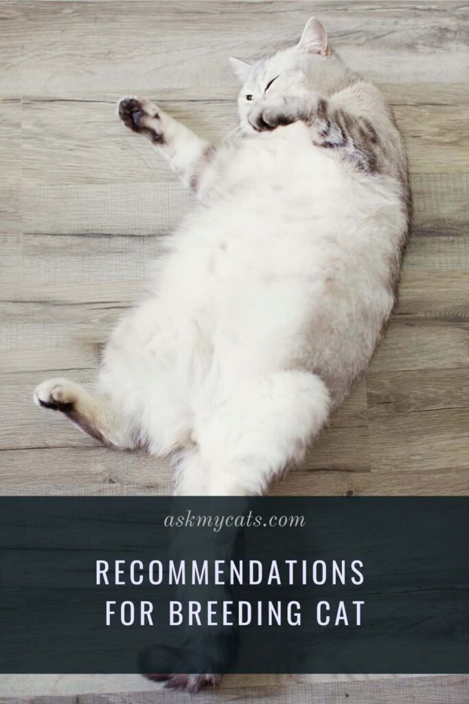 Recommendations for Breeding cat