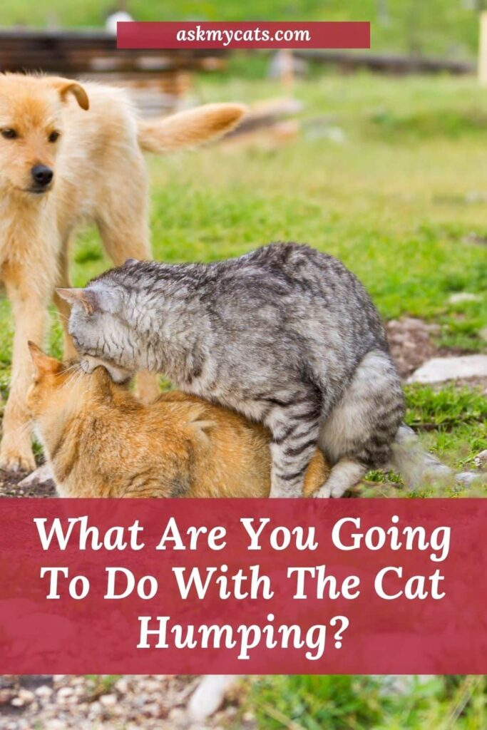 What Are You Going To Do With The Cat Humping