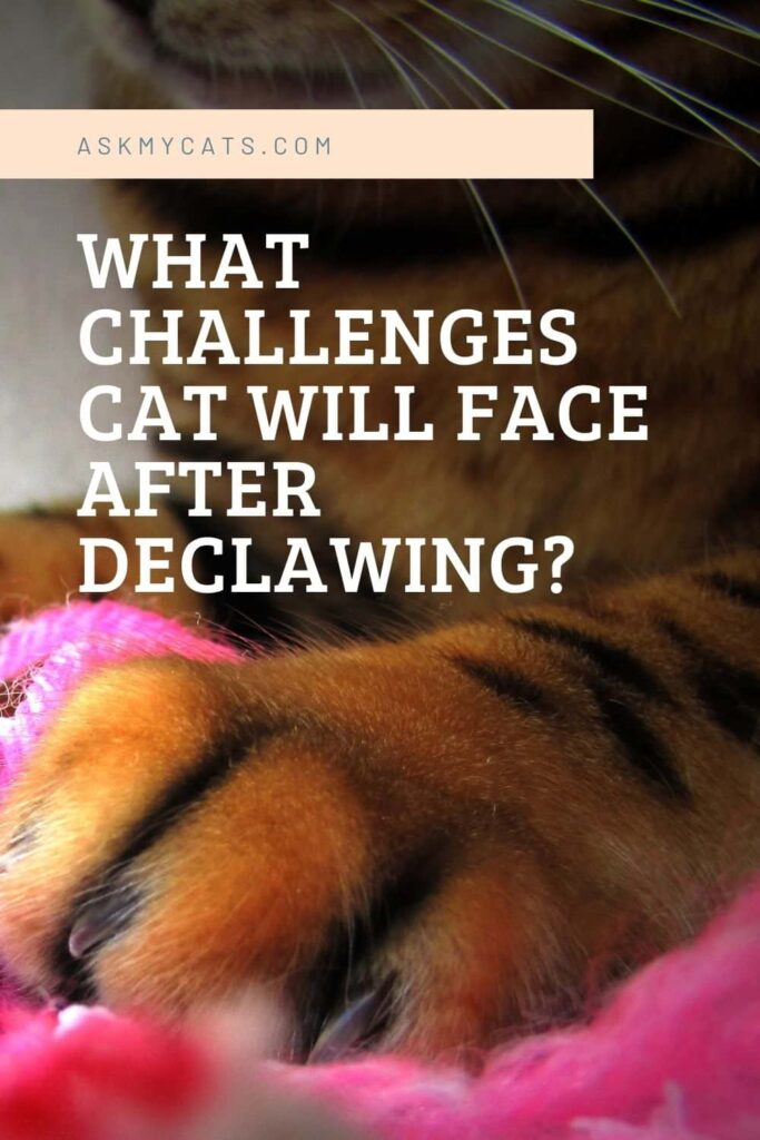 What Challenges Cat Will Face After Declawing