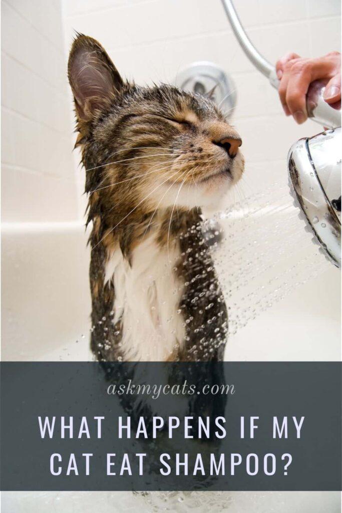 What Happens If My Cat Eat Shampoo