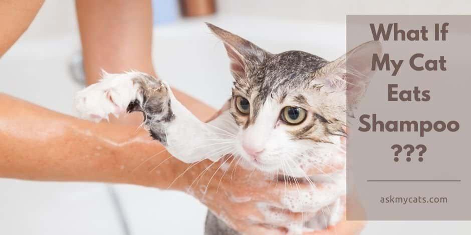 What If My Cat Eats Shampoo