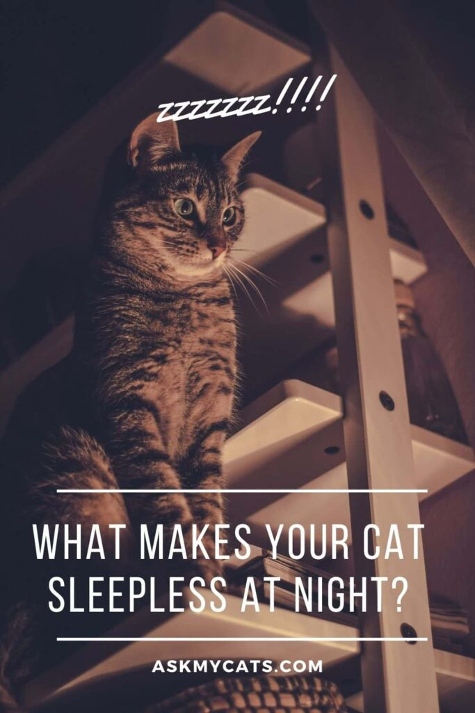 What Makes Your Cat Sleepless at Night