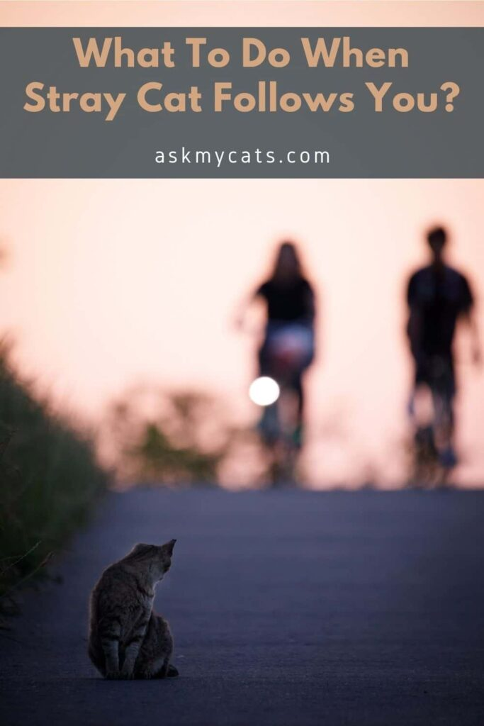 What To Do When Stray Cat Follows You