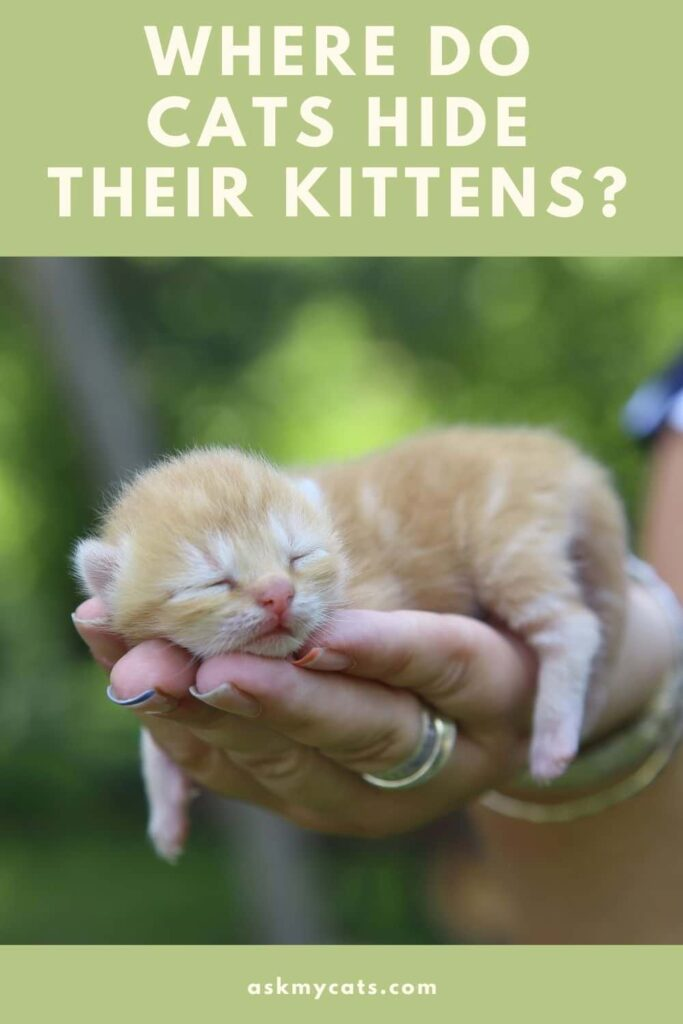 Where Do Cats Hide Their Kittens