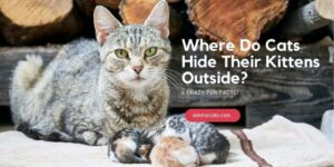 Where Do Cats Hide Their Kittens Outside? 6 Crazy Fun Facts!