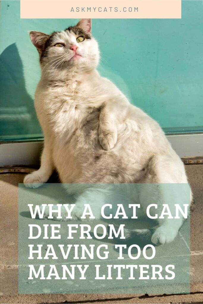 Why A Cat Can Die From Having Too Many Litters