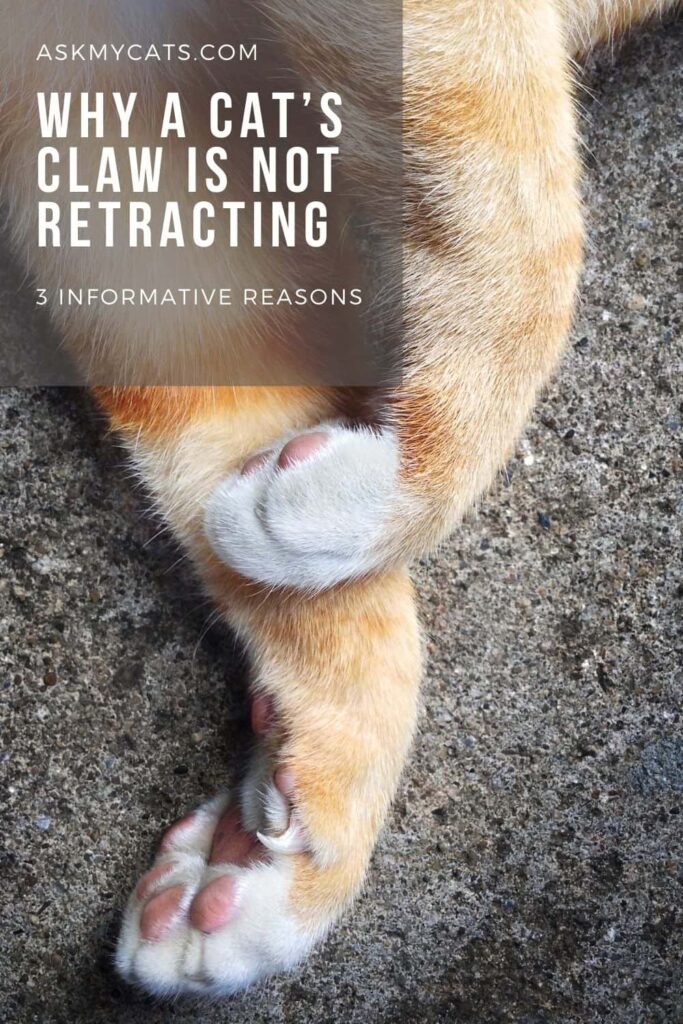 Why A Cat's Claw Is Not Retracting