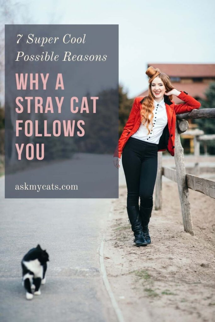 Why A Stray Cat Follows You