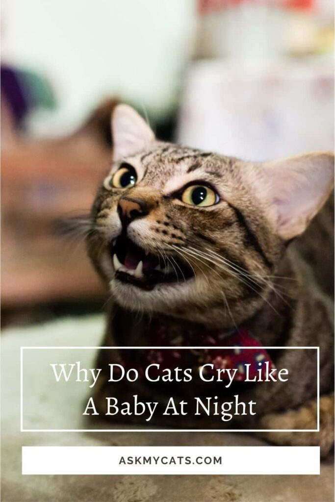 Why Do Cats Cry Like a Baby At Night 10 reasons