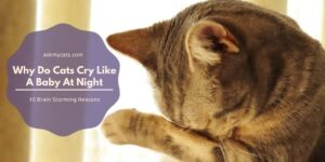 Why Do Cats Cry Like A Baby At Night? 10 Brain Storming Reasons