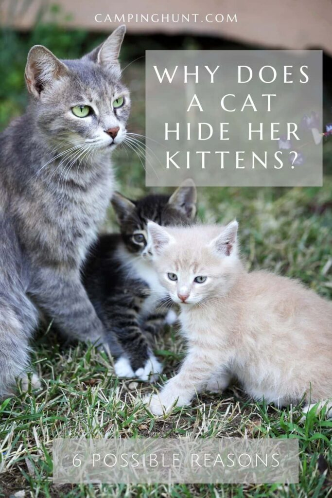 Why Does A Cat Hide Her Kittens