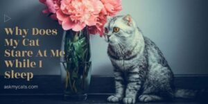 Why Does My Cat Stare At Me While I Sleep? 7 Extra-ordinary Reasons