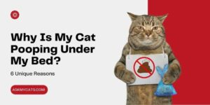 Why Is My Cat Pooping Under My Bed? 6 Unique Reasons