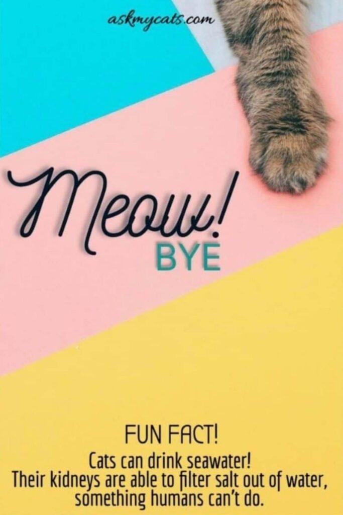 meow Bye
