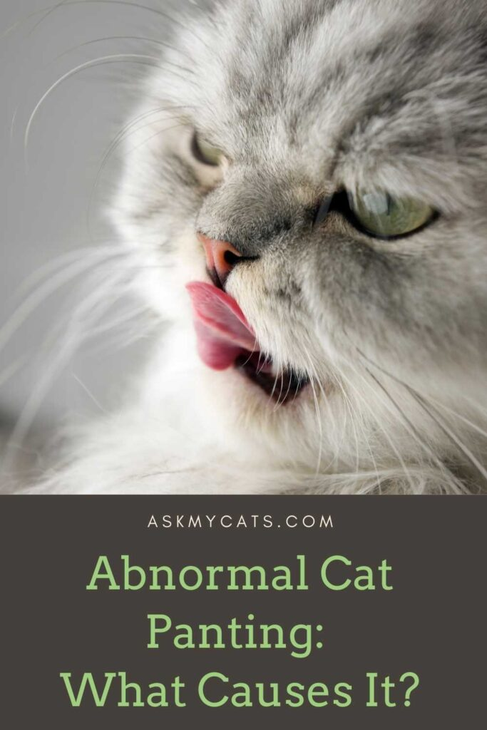 Abnormal Cat Panting_ What Causes It