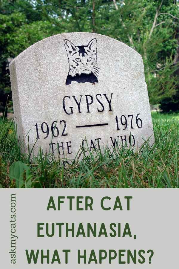 After Cat Euthanasia, What Happens?