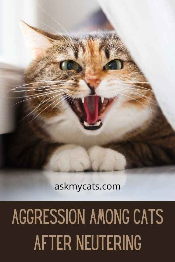 Aggression Among Cats After Neutering